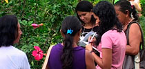 Plant Observation in Brazil